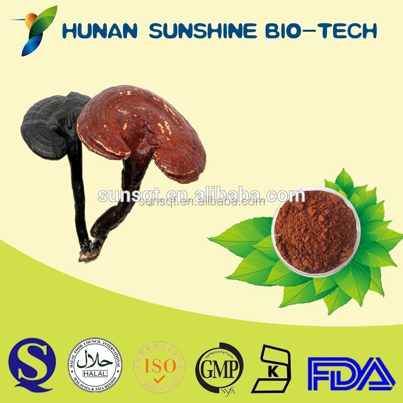 Purify your body health reishi p.e. extraction price red reishi mushroom ganoderma ludicum extract