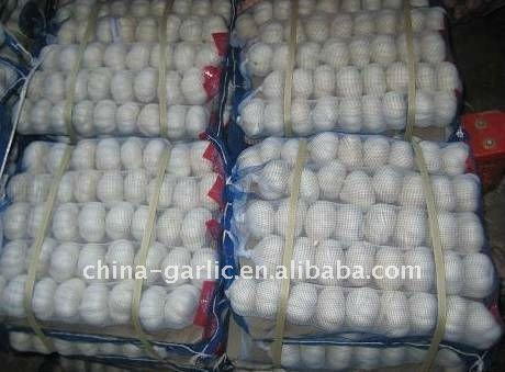 Fresh Red Garlic Specification In Chinese Capital Of Garlic ---- Jinxiang