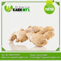 Best Price Chinese Fresh 10kg Carton Ginger