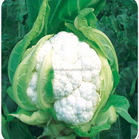 Hua ye cai zhong zi white flower seed for Broccoli seed with White Cauliflower