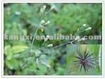 2013 100% Natural Plant Black Cohosh Extract