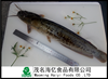China Export Hot sale frozen whole round Live Catfish All Size