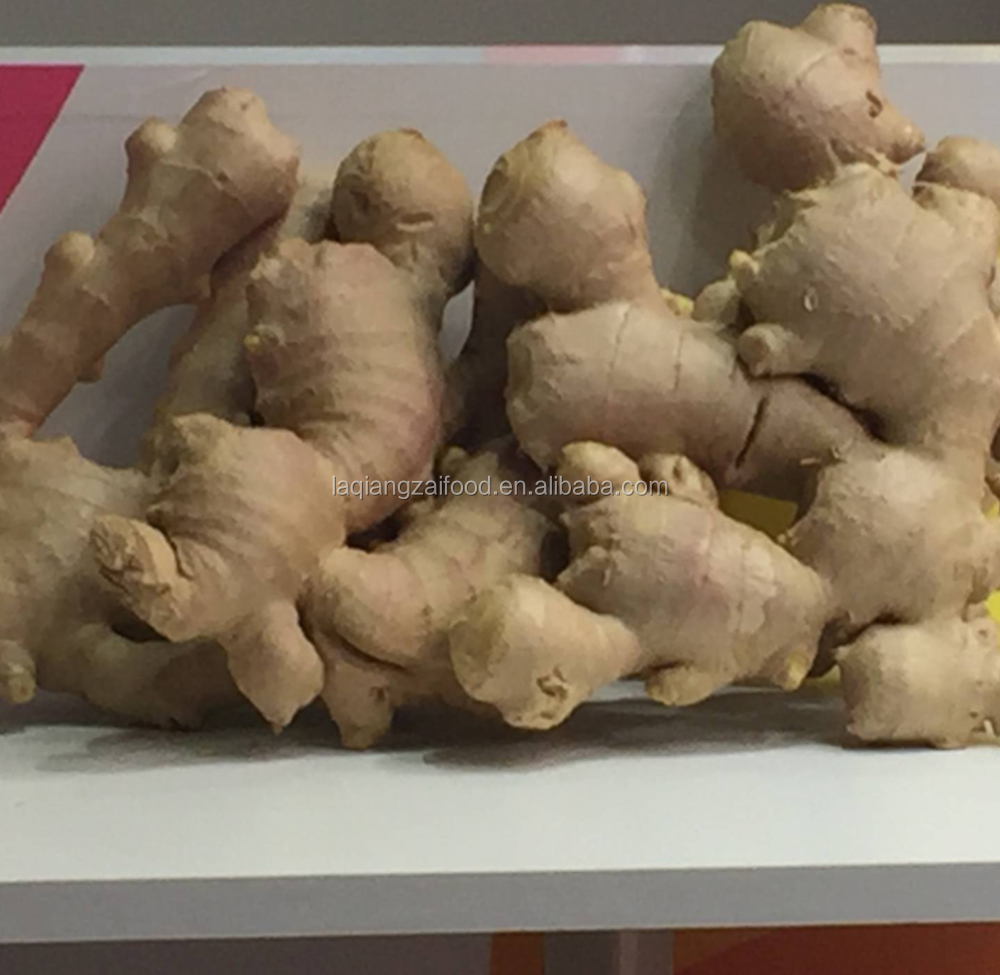 Chinese fresh yellow new crop mature ginger for sushi ginger