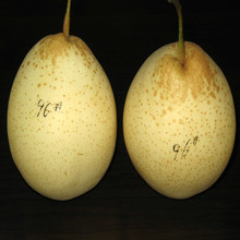 Sweet Chinese ya pear hot sale