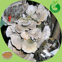 Turkey tail Coriolus versicolor powder Extract Coriolus versicolor Extract