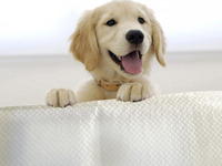Pet Training pads Products for regular Type