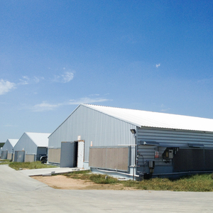 Low cost steel poultry shed design with light steel