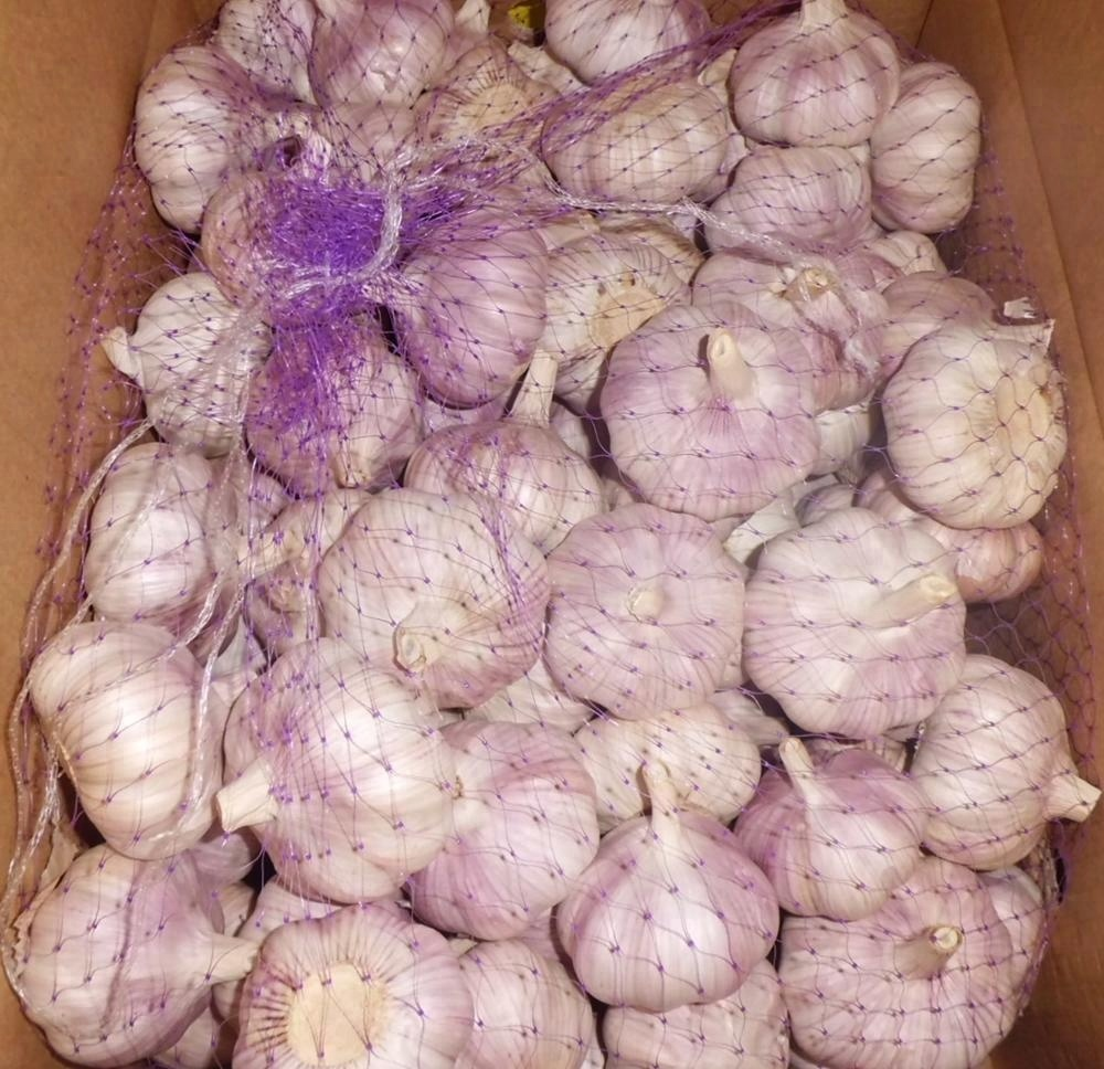 new white/red garlic/Jinxiang origin