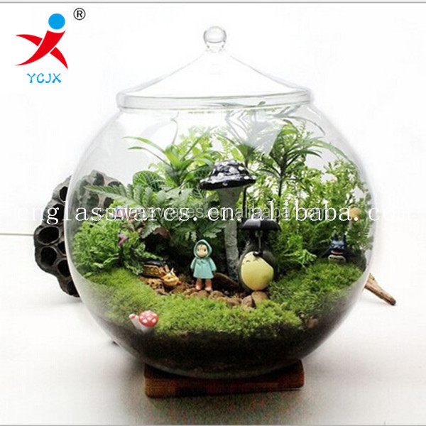 clear borosilicate glass ball plant holder with glass lids