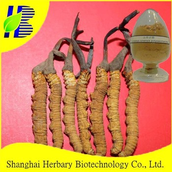 2017 Natural supplement Cordyceps extract