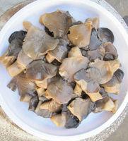grey oyster mushroom in brine