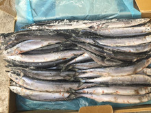 New Landing Frozen Pacific Saury Fish Cololabis Saira On Sale