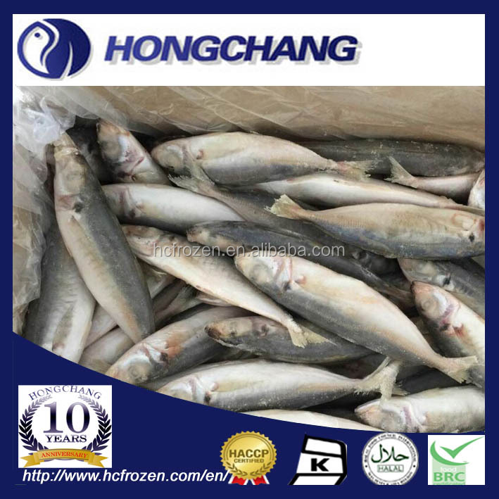 SMALL EYES HORSE MACKEREL FOR SALE