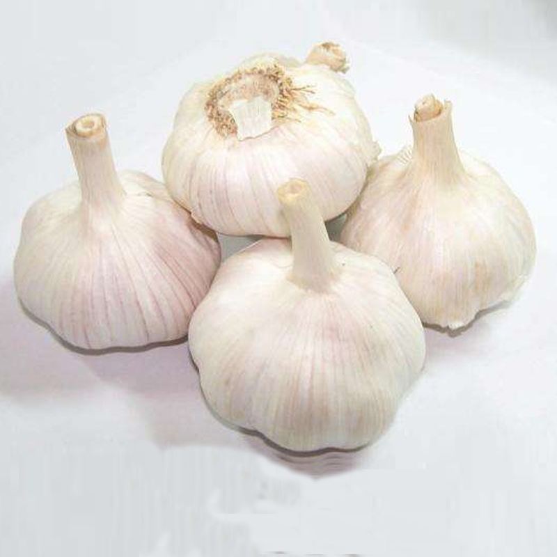 2018 High Quality Natural Garlic