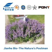 Natural Triterpenoid Rosemary Extract Ursolic Acid Reducing Phlegm Ursolic Acid