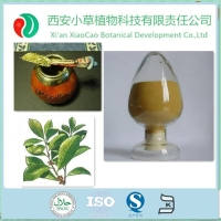 Factory Supply Yerba Mate Extract/Yerba Mate Extract