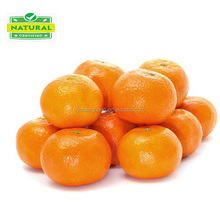Name all citrus fruits/mandarin orange/fresh orange/list of yellow fruits