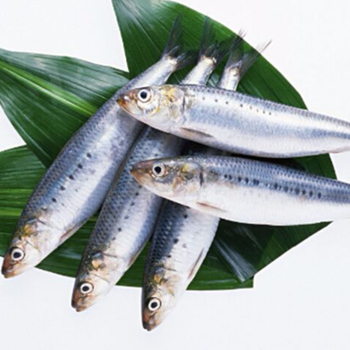 Good Quality Can Fish Wholesale Frozen Whole Sardines