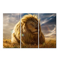 Lion In The Sun Modern Print/Picture Canvas Art/Lion Painting Print On Canvas