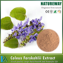 Hot sell high quality coleus forskolin extracts powder coleus forskolin