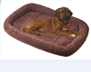 Padded Dog Bed Warm Fur Pet Kennel Pad Cat Crate Cushion