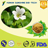 Pure Bacopa Extract,Bacopa monnieri Extract,Bacopa monnieri P.E.(Ratio:4:1~20:1) with good price