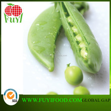 New harvesting fresh vegetable Snap Pea