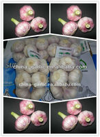 Shandong Garlic/Garlic Price In China 2013 Packing In 20kg Msh Bag