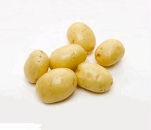 china product chinese fresh potato