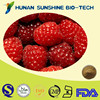 Nature Raspberry Extract Powder for Weight Loss