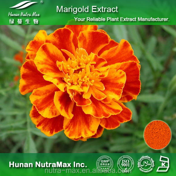 Natural Color Marigold Extract 10% Lutein with Good Solubulity