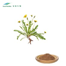 High Quality Organic Dried Dandelion Root Extract Powder
