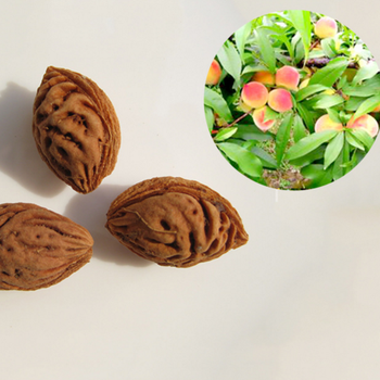 S122 High quality tropical fruit Hot sale peach seeds