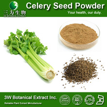 Herb Extract Dried Celery Seed Powder Manufacturer(Celery Leaf Extract)