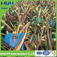 RECYCLE HDPE Fruit Protective Shade Net