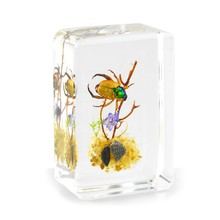 New design handmade real insects resin acrylic high quality craft gifts