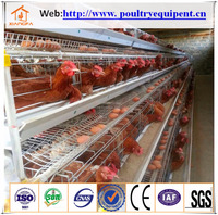 hot sale automatic layer chicken poultry farm laying hens