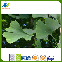 Alibaba supplier sex product Ginkgo Biloba extract