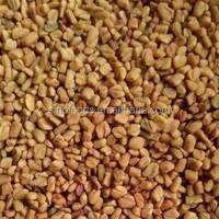hu lu ba zi high quality Chinese herbs alternative medicine fenugreek seed
