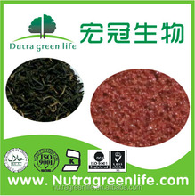 Factory Direct Supply natural Black Tea Extract, black tea P.E.