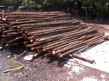 Supplying Mangrove Wood For Construction Piling