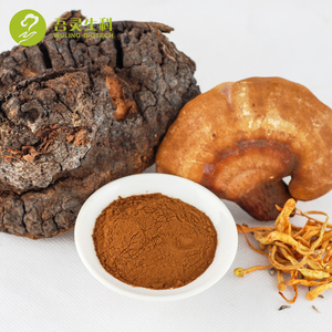 Herbal Supplement Natural Chaga Mushroom Chaga Extract Powder for Health Care