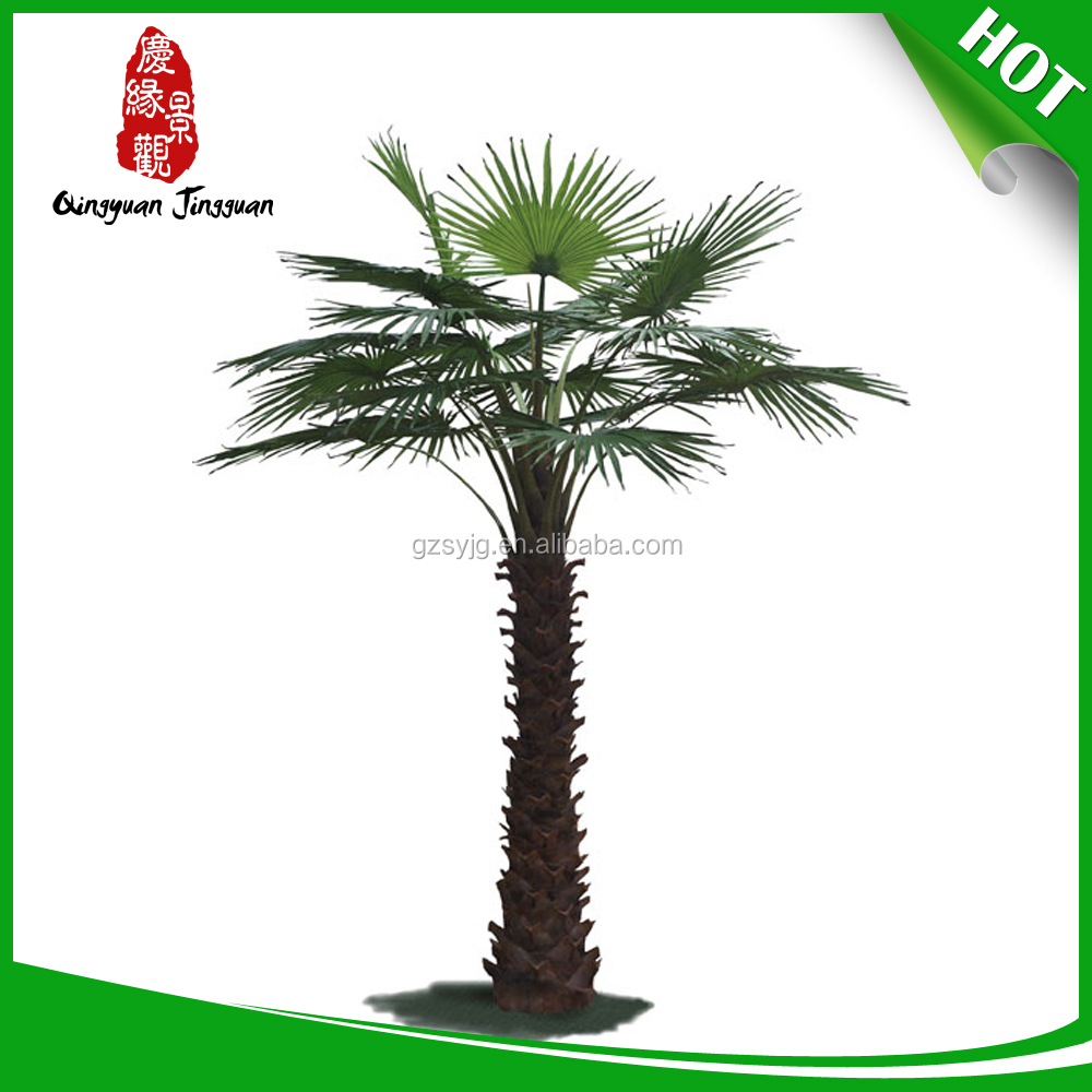 Popular Sale price of washingtonia palms