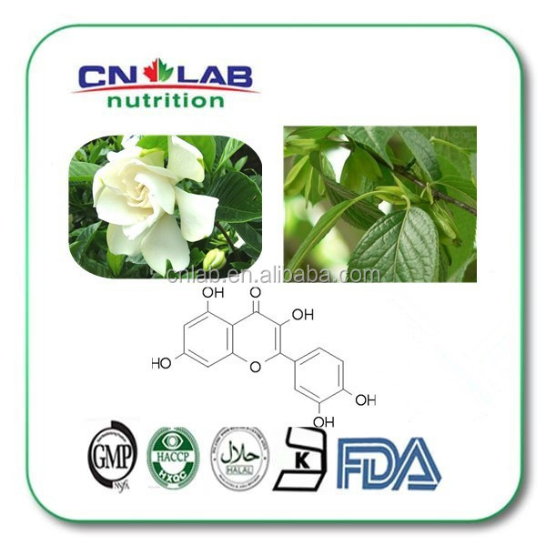 Quercetin plant extract,Sophora japonica extract quercetin,quercetin glycoside