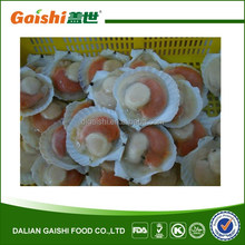 2014 New Crop Frozen Half Shell Scallops (roe on)
