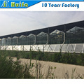 Hot sale Multi span pc sheet greenhouse for agriculture