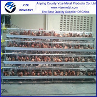 alibaba china day old broiler chicks for sale in africa/low cost steel poultry shed
