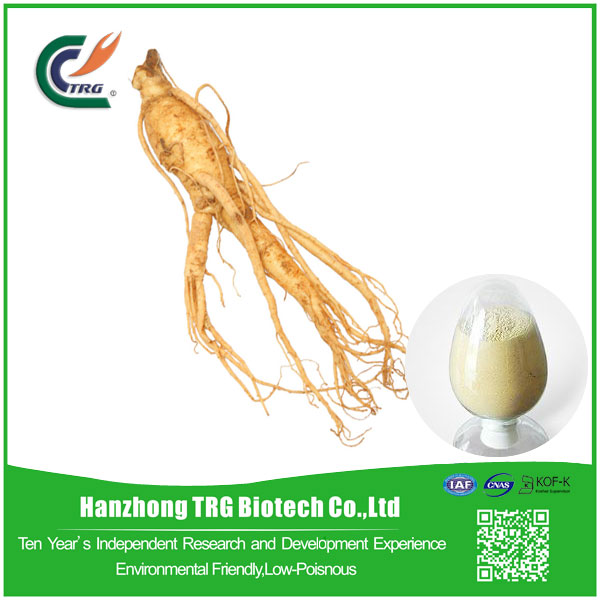 Professional panax ginseng extract 80 ginsenoside with low price