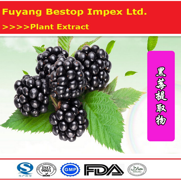 Hei Mei Best Price Health Care Top Quality Black Chokeberry P.e.