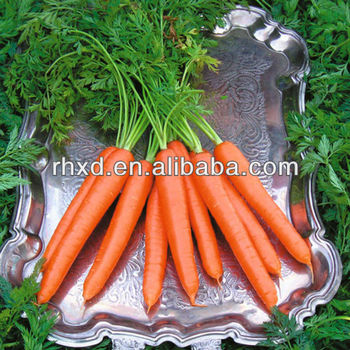 wholesale frozen carrot with high quality